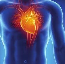 5 Certara_Software_Cardiac-Safety-Simulator